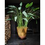 Silk-ka Strelitzia Green   178 cm