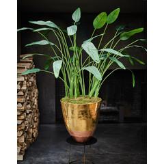 Silk-ka Plant Strelitzia Groen | 178 cm