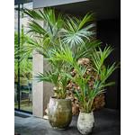 Silk-ka Palm Groen   150 cm