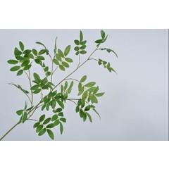 Silk-ka Leaf branch Green | 99 cm