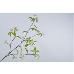 Silk-ka Branche de feuille verte | 148 cm