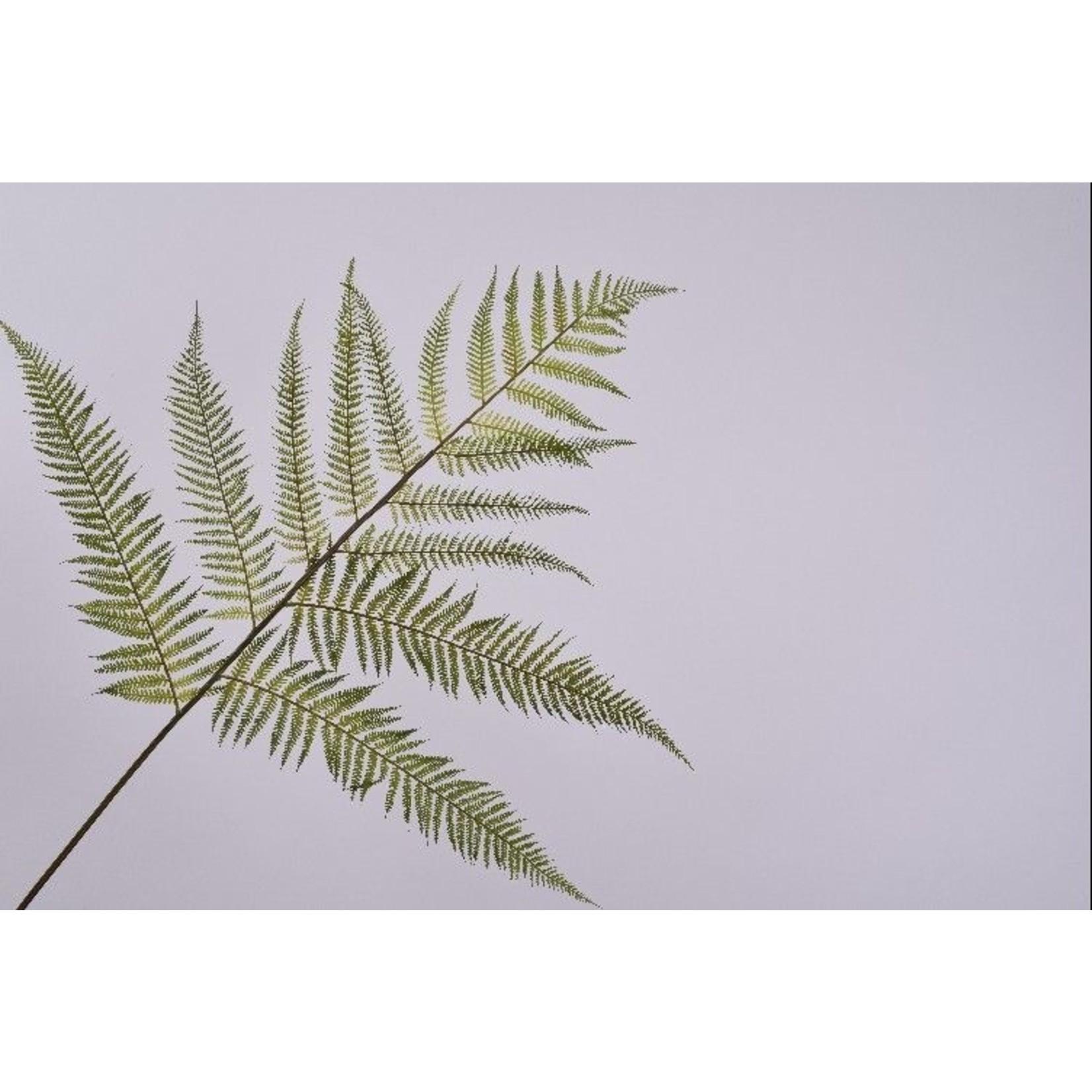 Silk-ka Branche de feuille Fern Green   157 cm