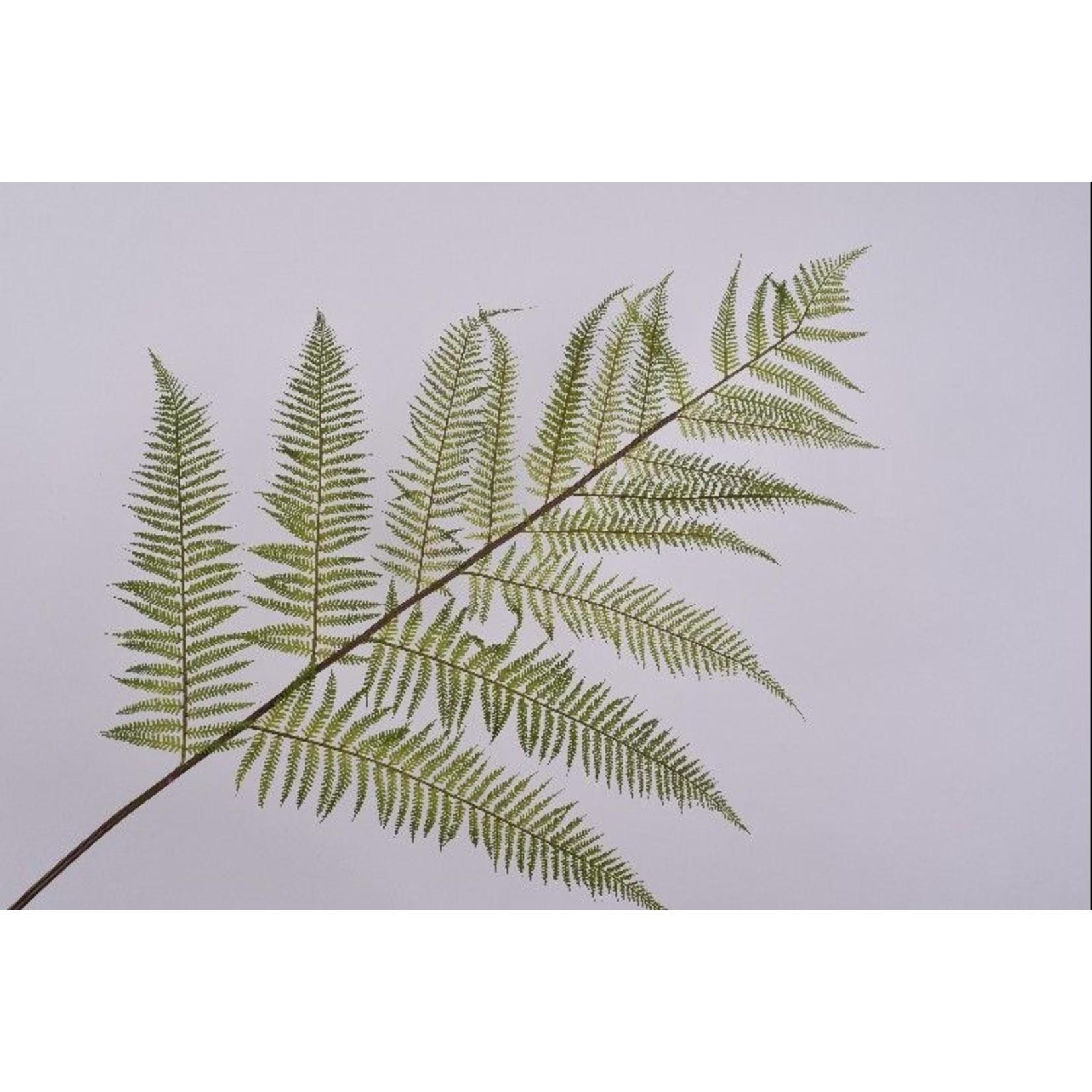 Silk-ka Leaf branch Fern Green | 186 cm