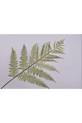 Silk-ka Branche de feuille Fern Green | 186 cm