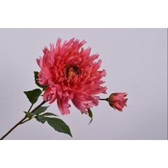 Silk-ka Chrysanthemum Steel Beauty   78 cm