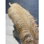 Ostrich feather Gold - 50 cm