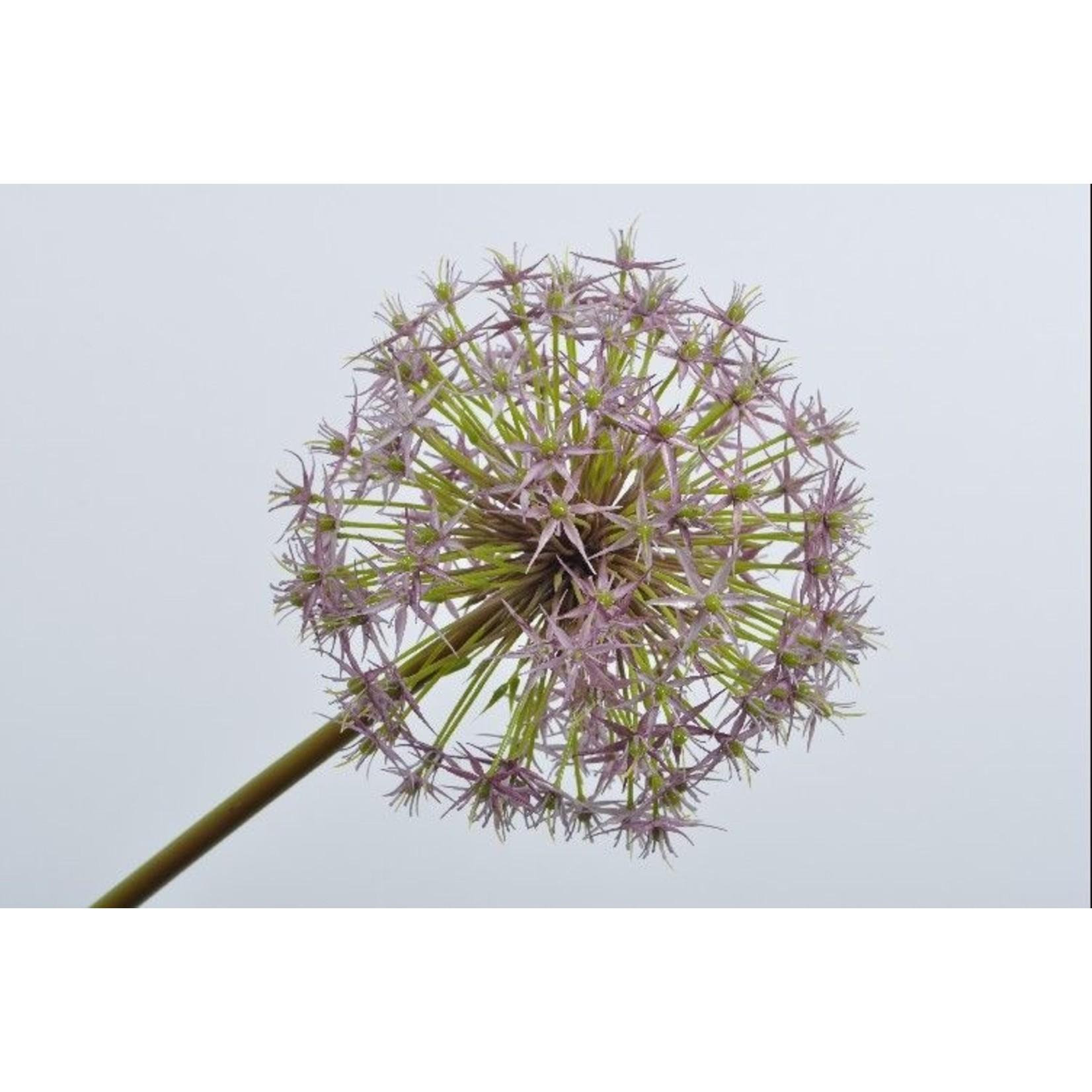 Silk-ka Allium Steel Paars   104 cm