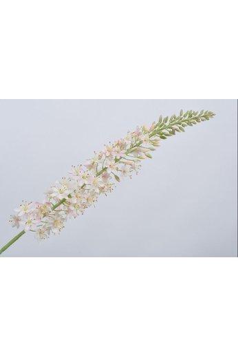 Silk-ka Rose acier Eremurus | 107 cm