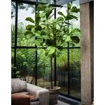 Silk-ka Ficus Green   254 cm