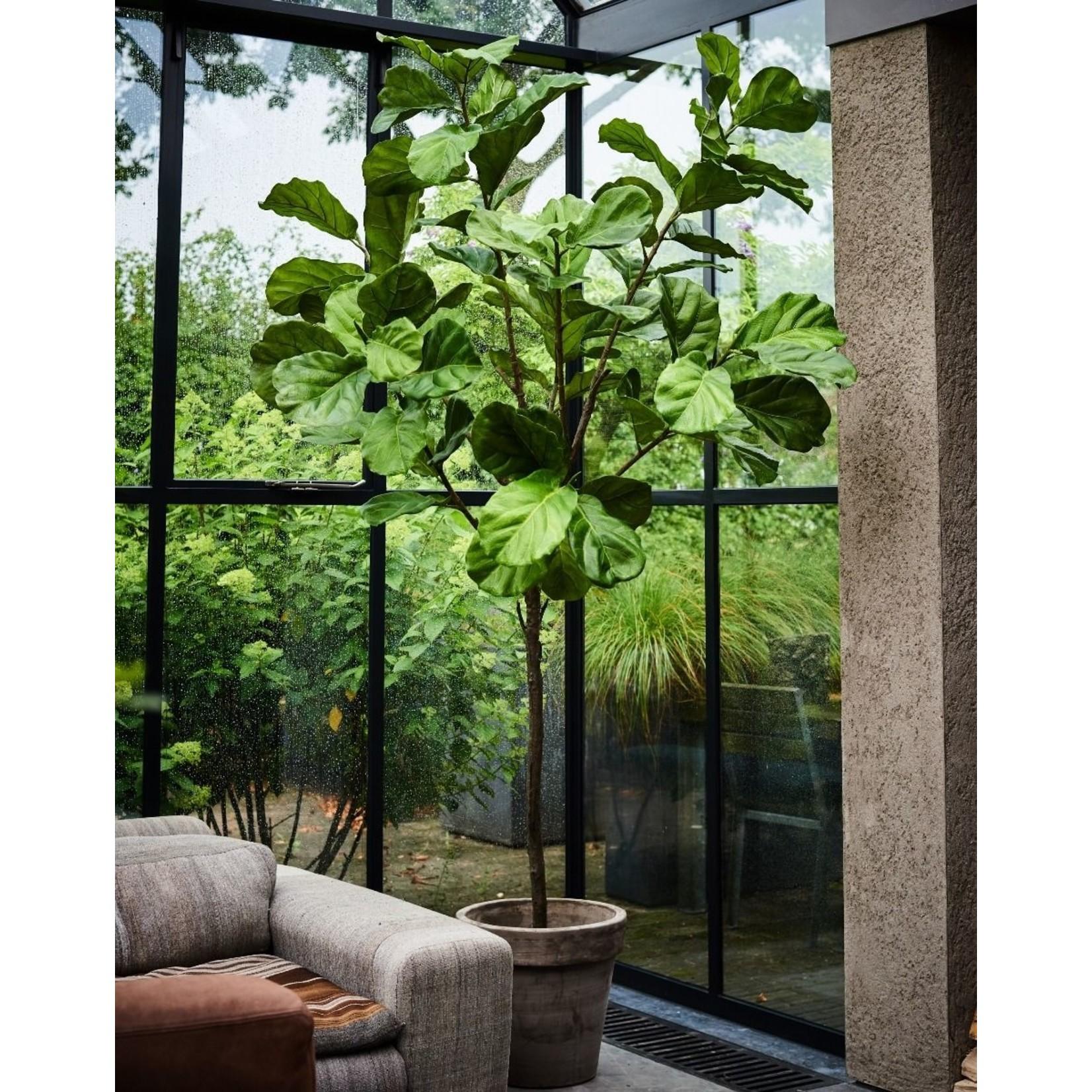 Silk-ka Plant Ficus Groen   254 cm