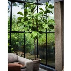Silk-ka Plant Ficus Green | 254 cm