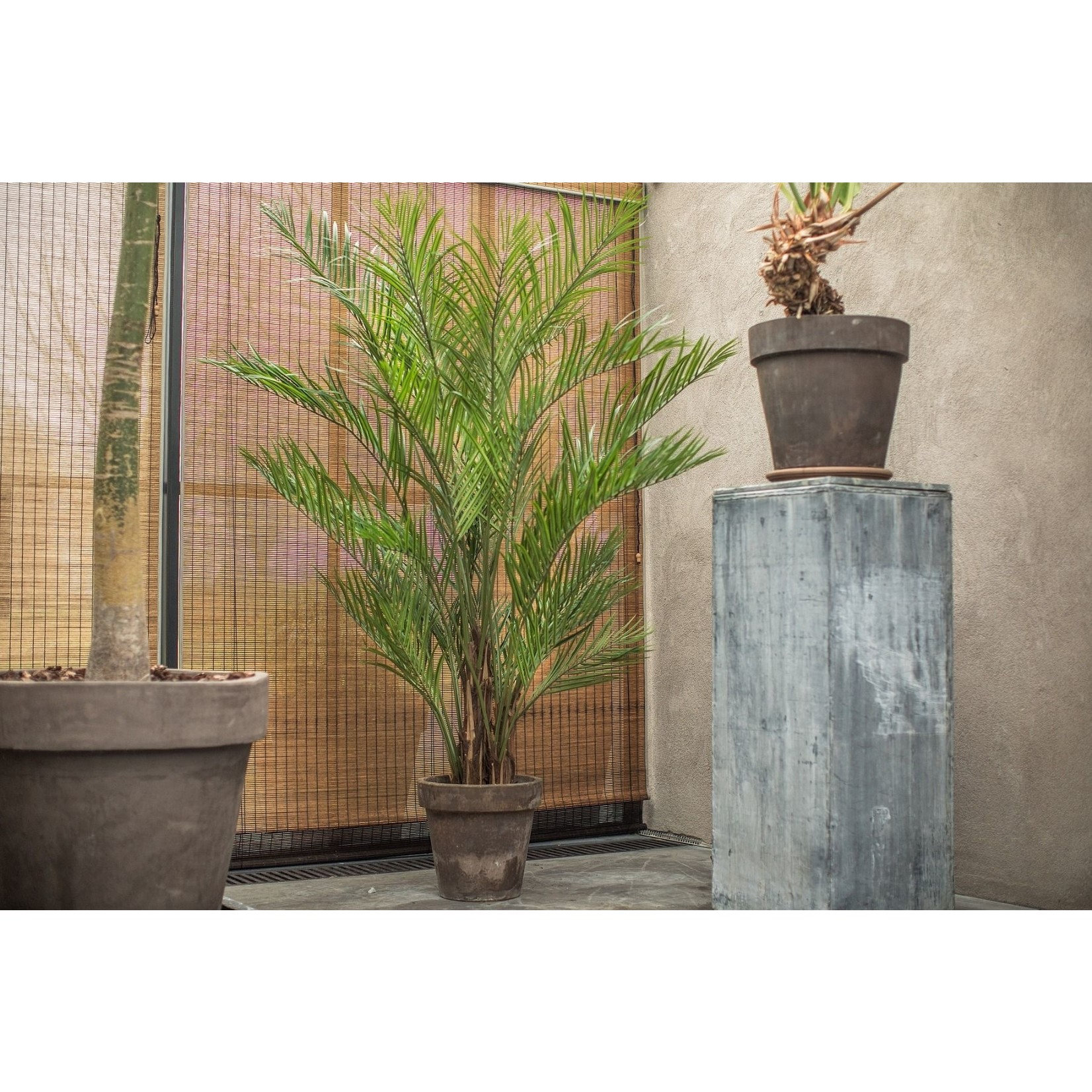Silk-ka Palm Green   230 cm