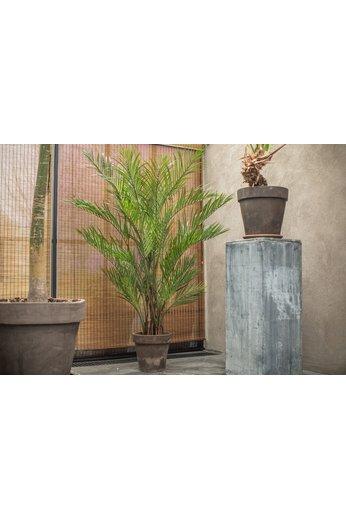 Silk-ka Plant Kentia Palm Groen   230 cm