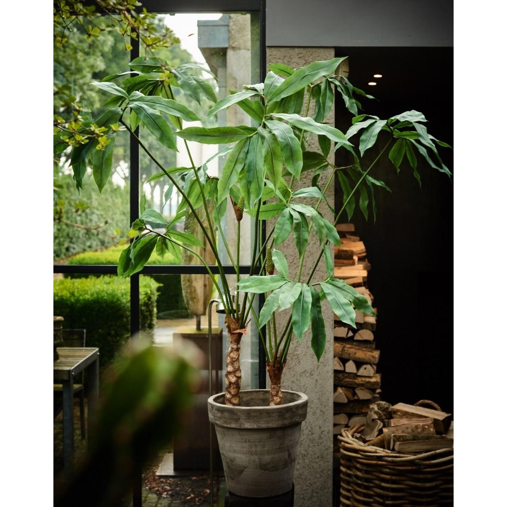 Silk-ka Plante verte | 204 cm