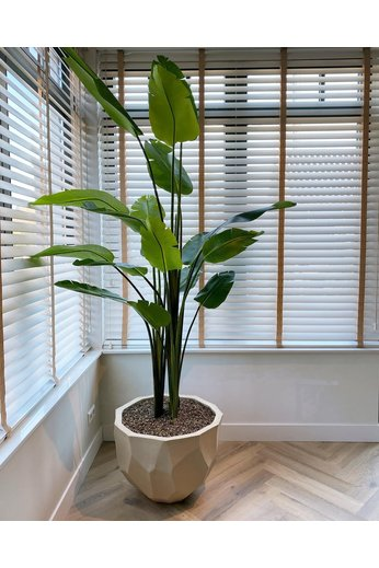 Silk-ka Plant Strelitzia Green | 243 cm