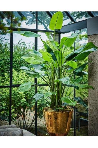 Silk-ka Strelitzia Plant Groen | 150 cm