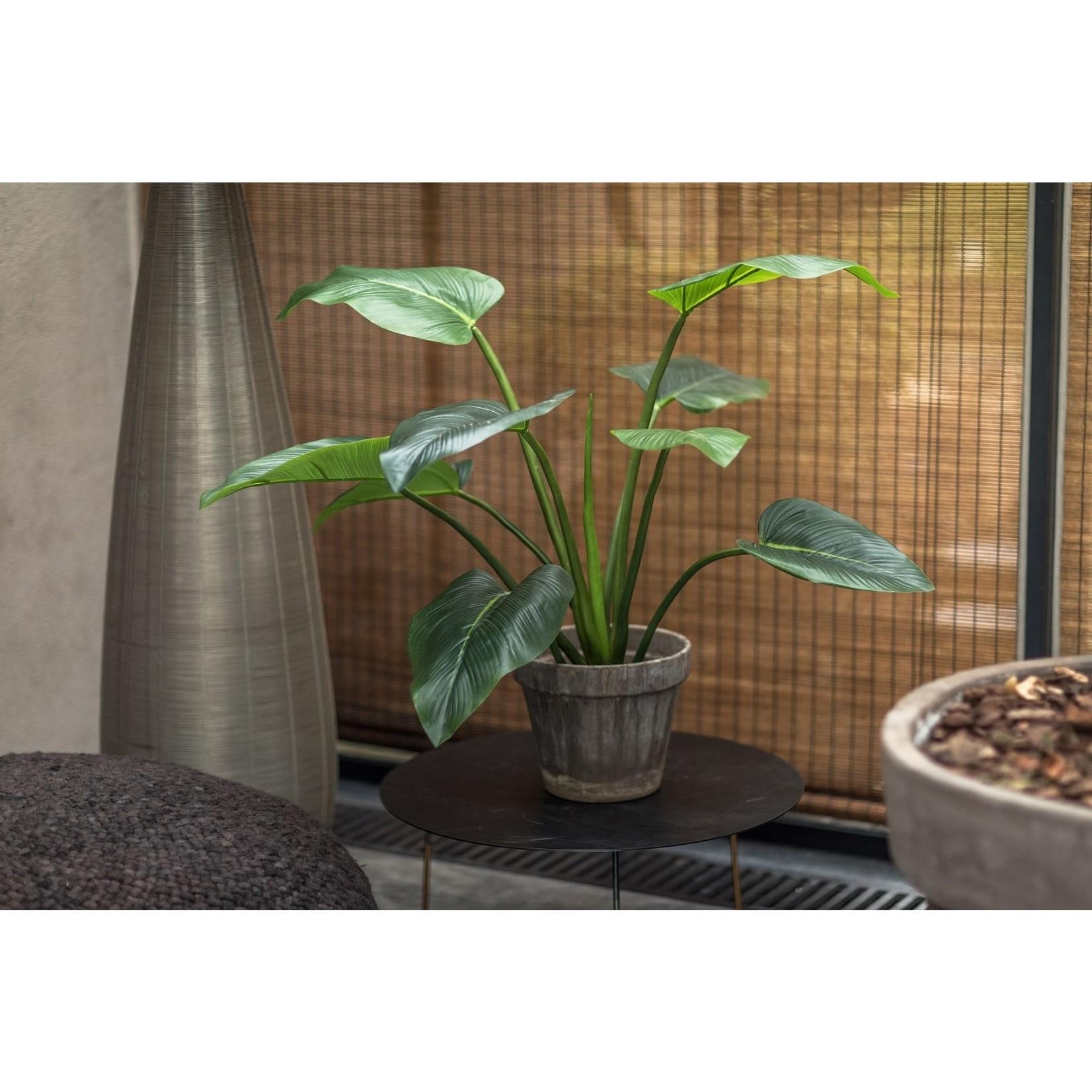 Silk-ka Plant Alocasia Green   91 cm