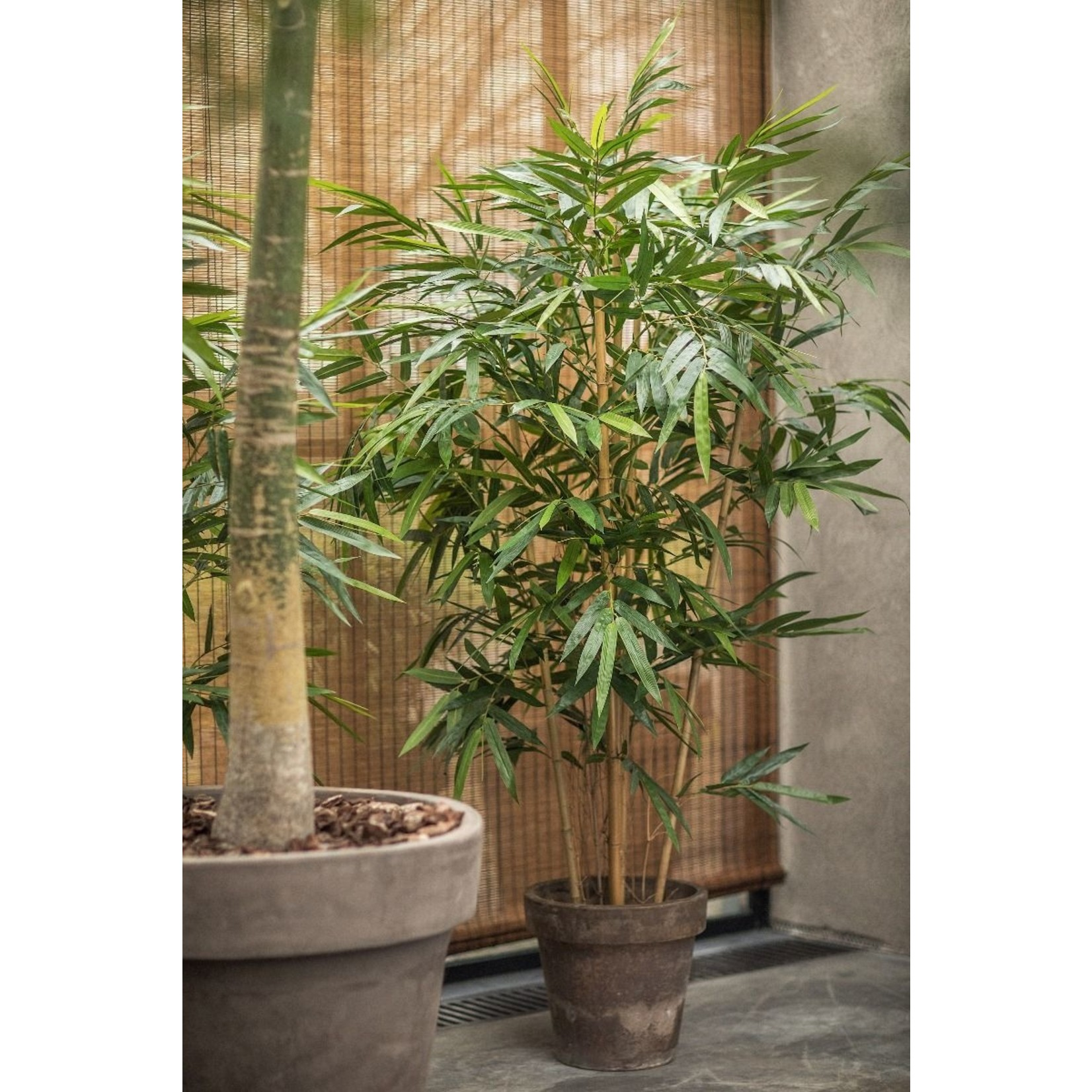 Silk-ka Plant Bamboo Green | 183 cm