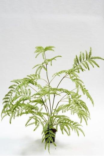 Silk-ka Plant Fern Green | 150 cm