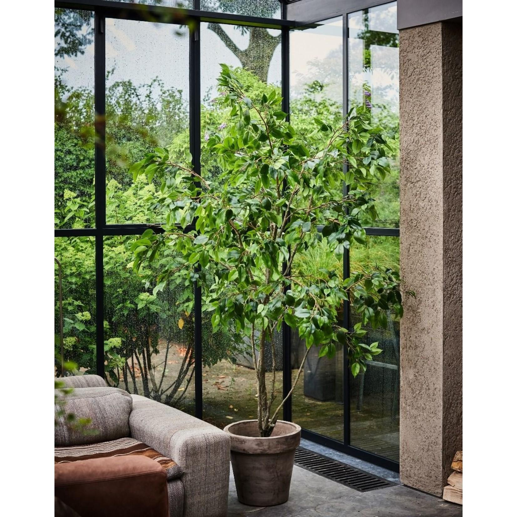 Silk-ka Plant Ficus Groen   240 cm