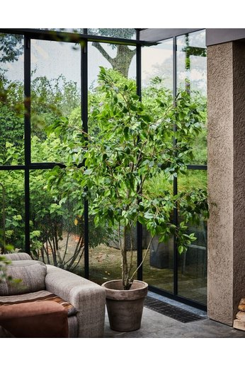 Silk-ka Plant Ficus Green | 240 cm