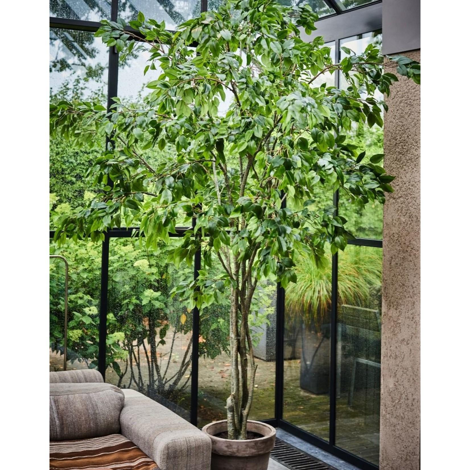 Silk-ka Plant Ficus Green   300 cm