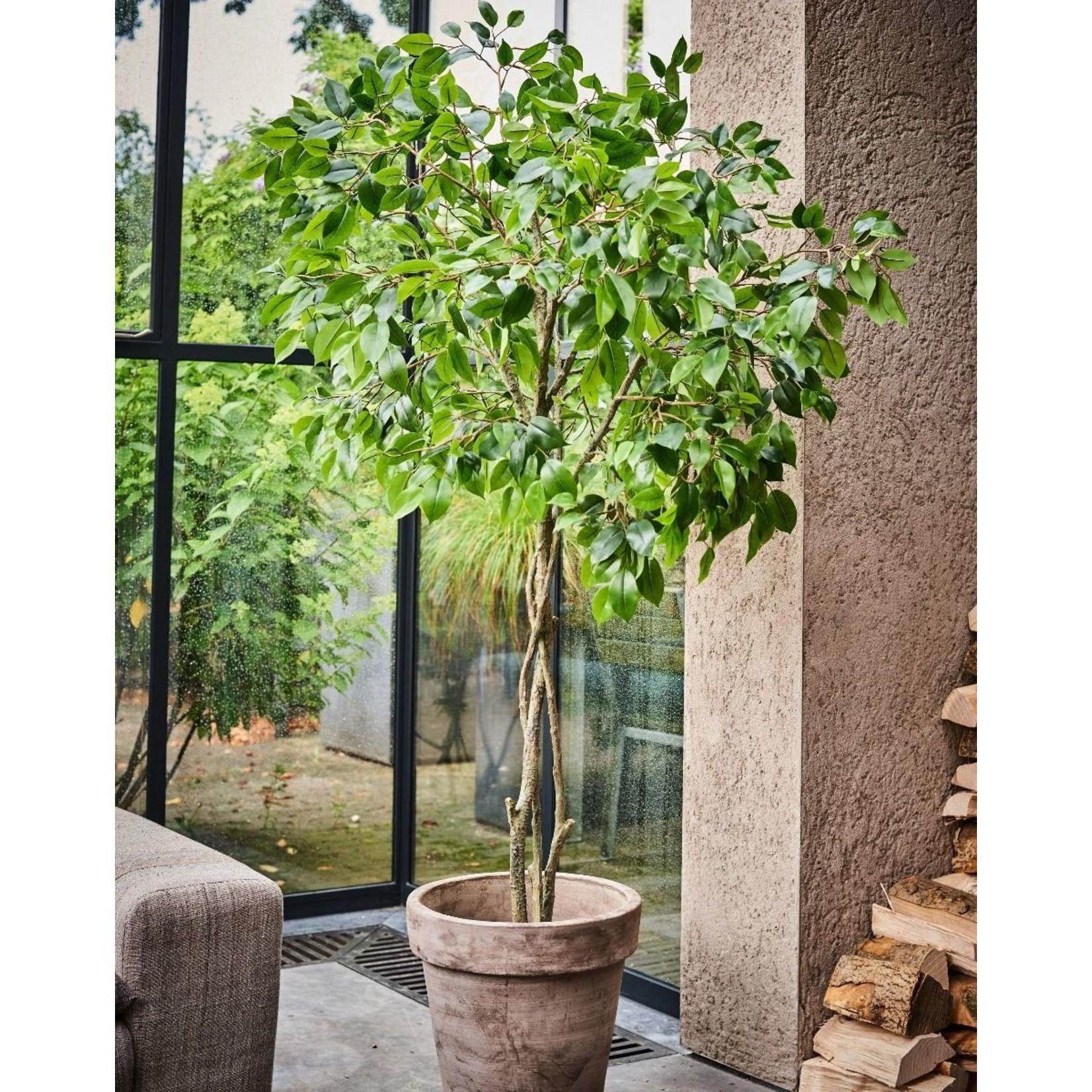 Silk-ka Plant Ficus Groen | 180 cm