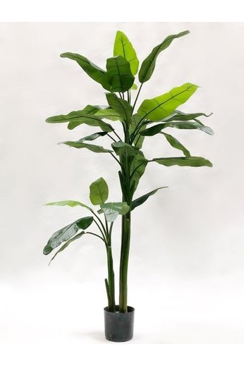 Silk-ka Banana Tree Green | 220 cm
