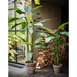 Silk-ka Bananenboom Groen   220 cm