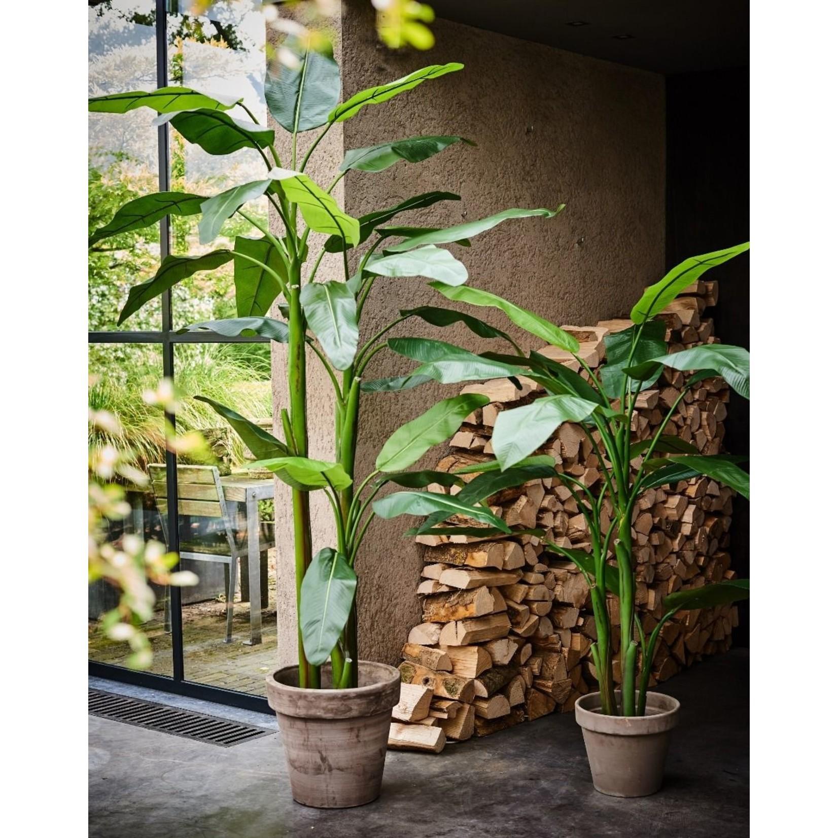 Silk-ka Bananier Vert | 220cm