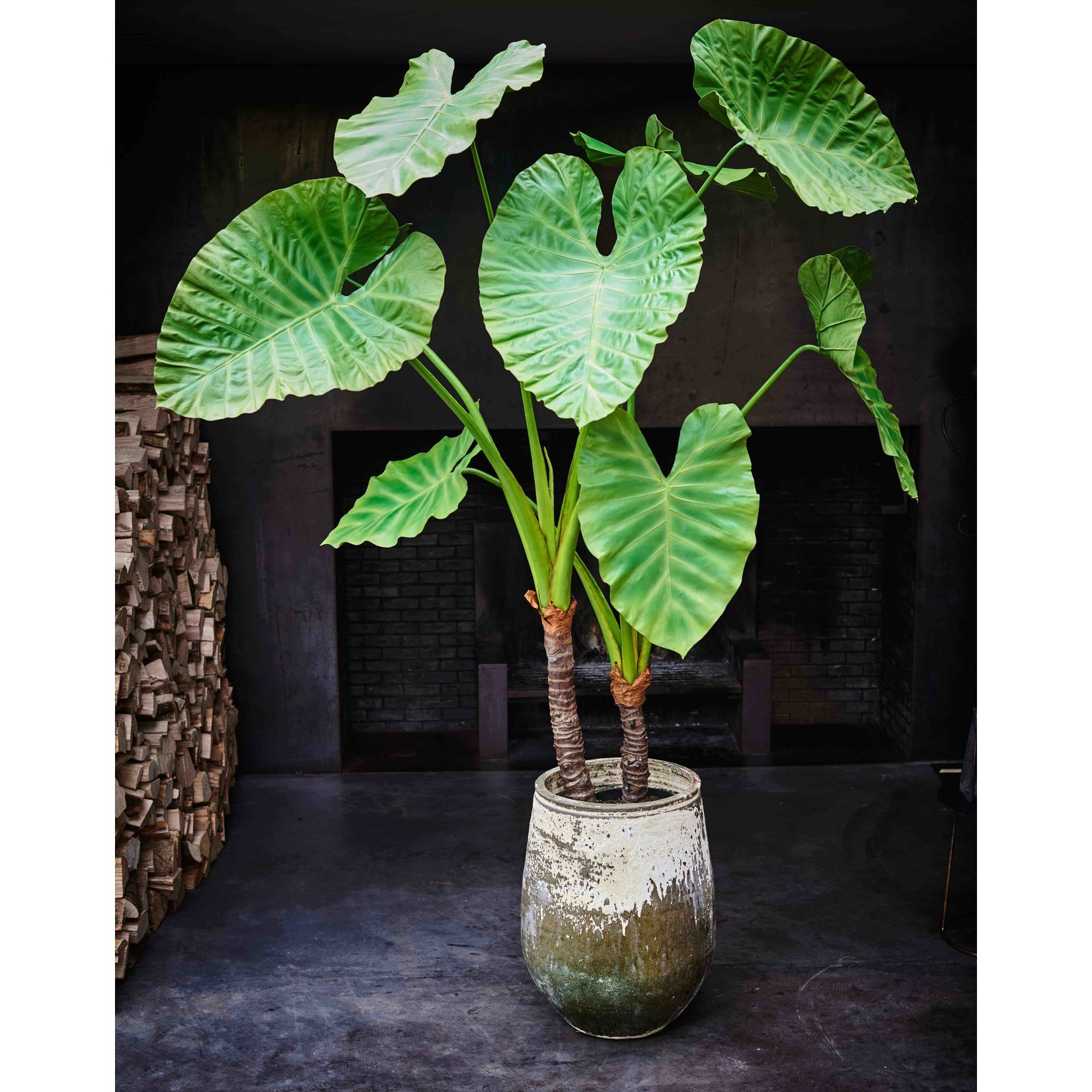 Silk-ka Plant Alocasia Green   175 cm
