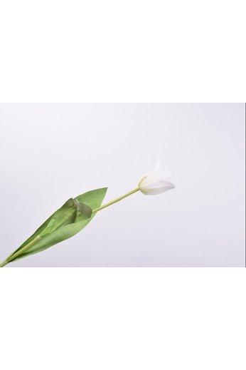 Silk-ka Tulip Stem White   61 cm