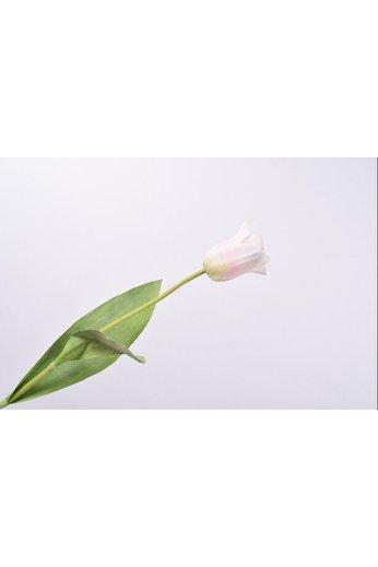 Silk-ka Tulip Stem White / Pink | 61 cm