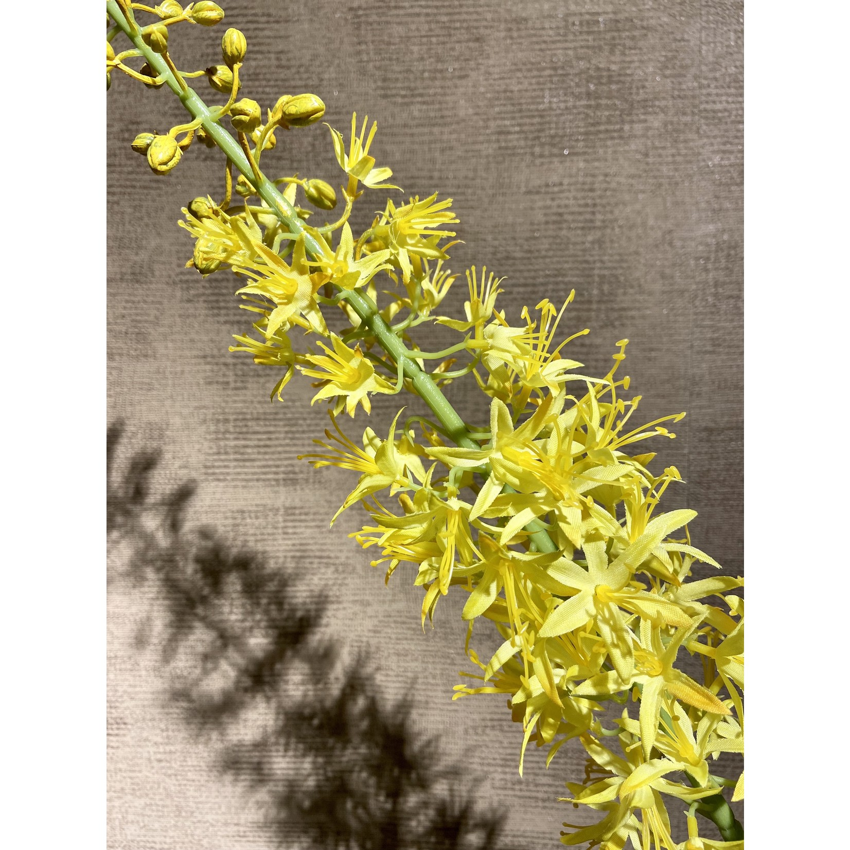 Silk-ka Jaune acier Eremurus | 104 cm