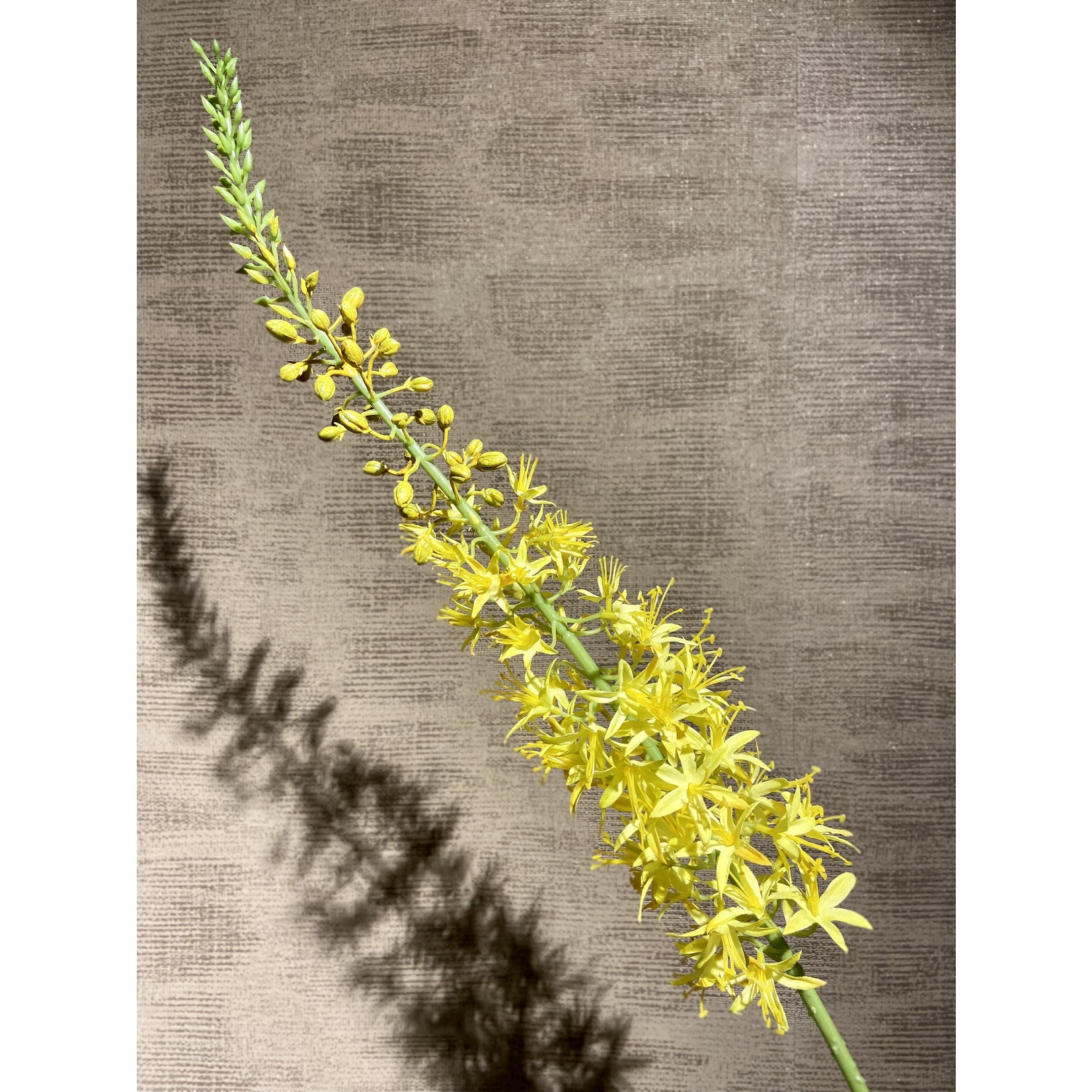 Silk-ka Eremurus Steel Yellow | 119 cm