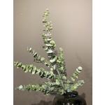 Silk-ka Branche d'eucalyptus vert | 111cm