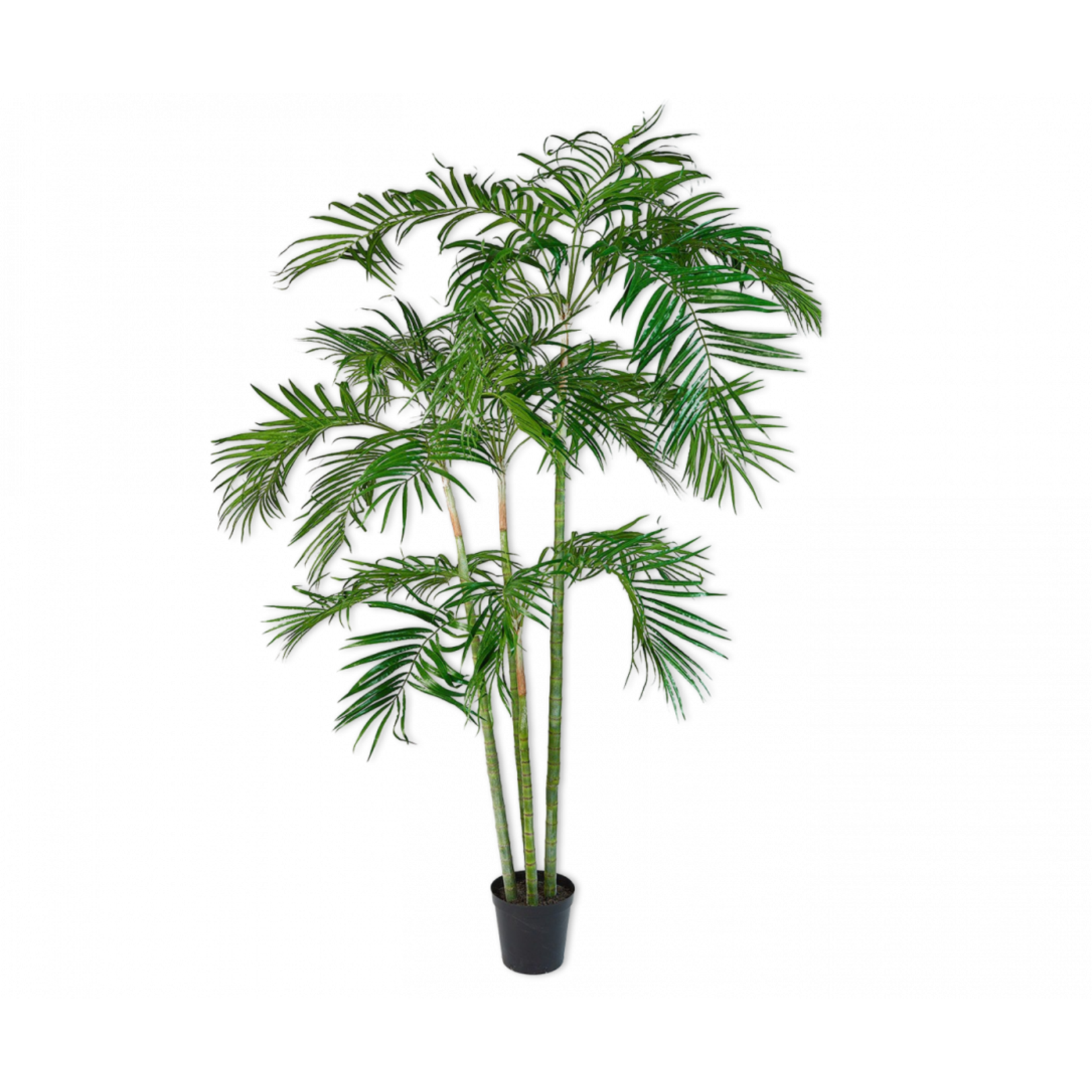 Silk-ka Palm Green   274 cm