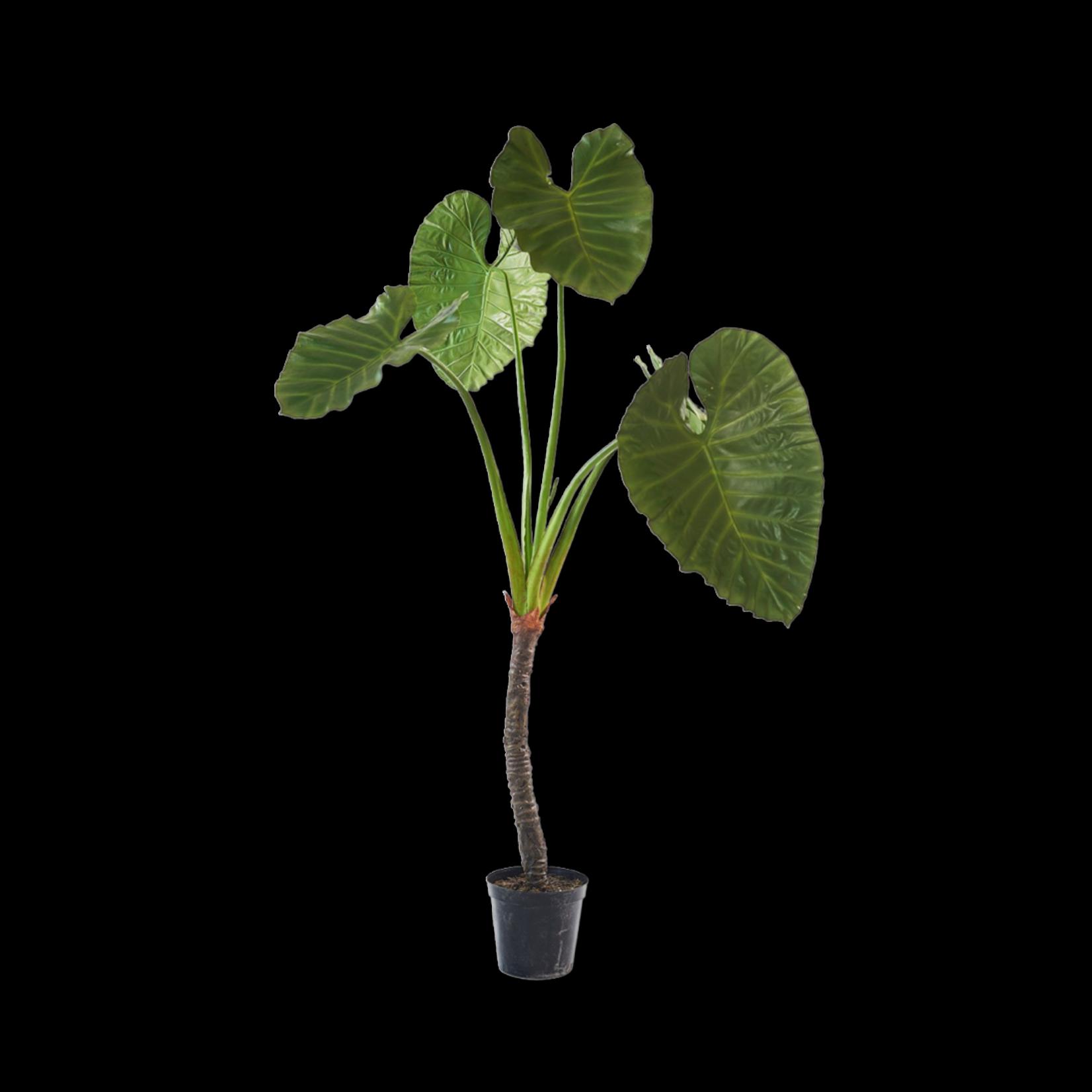 Silk-ka Alocasia Groen   220 cm