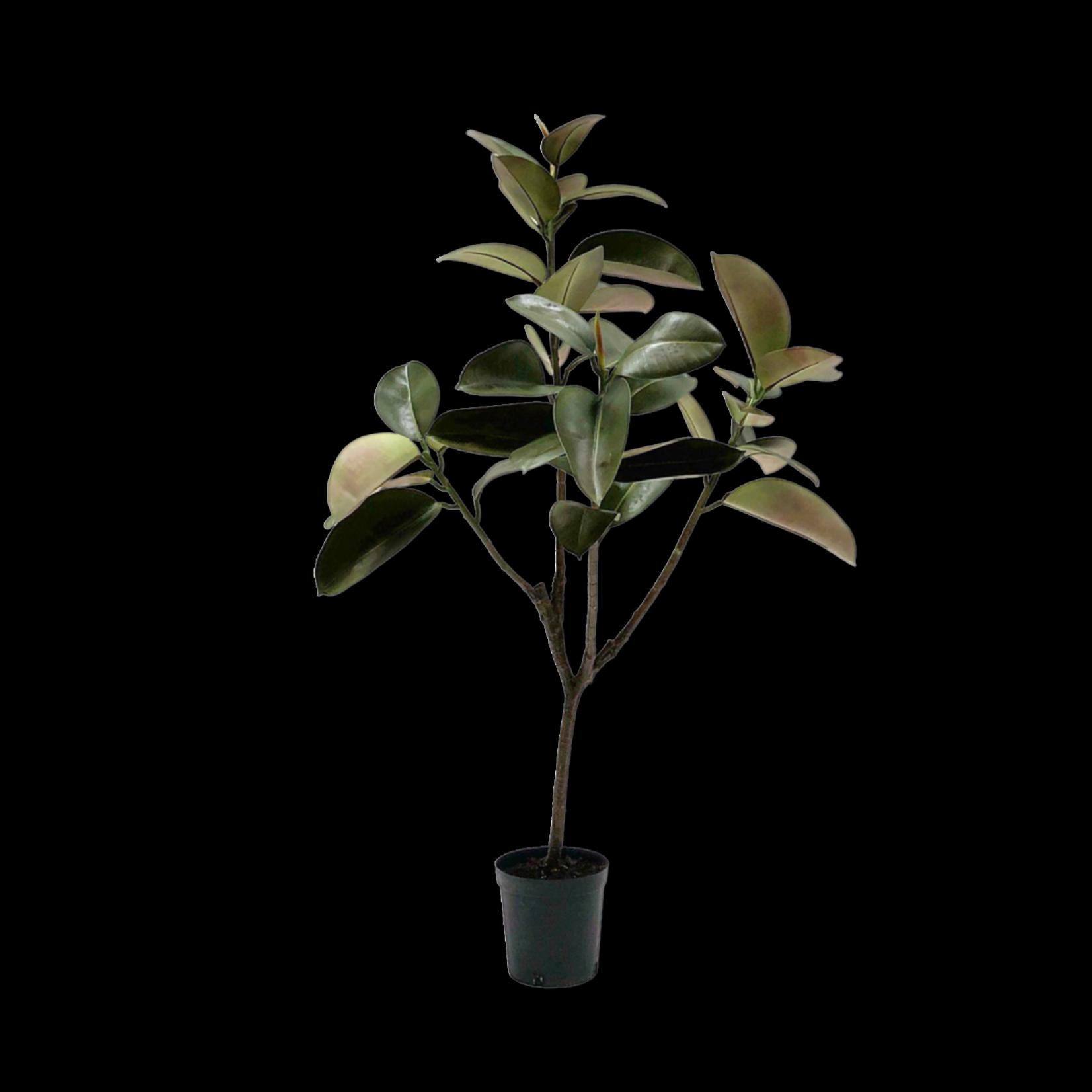 Silk-ka Ficus vert | 151cm