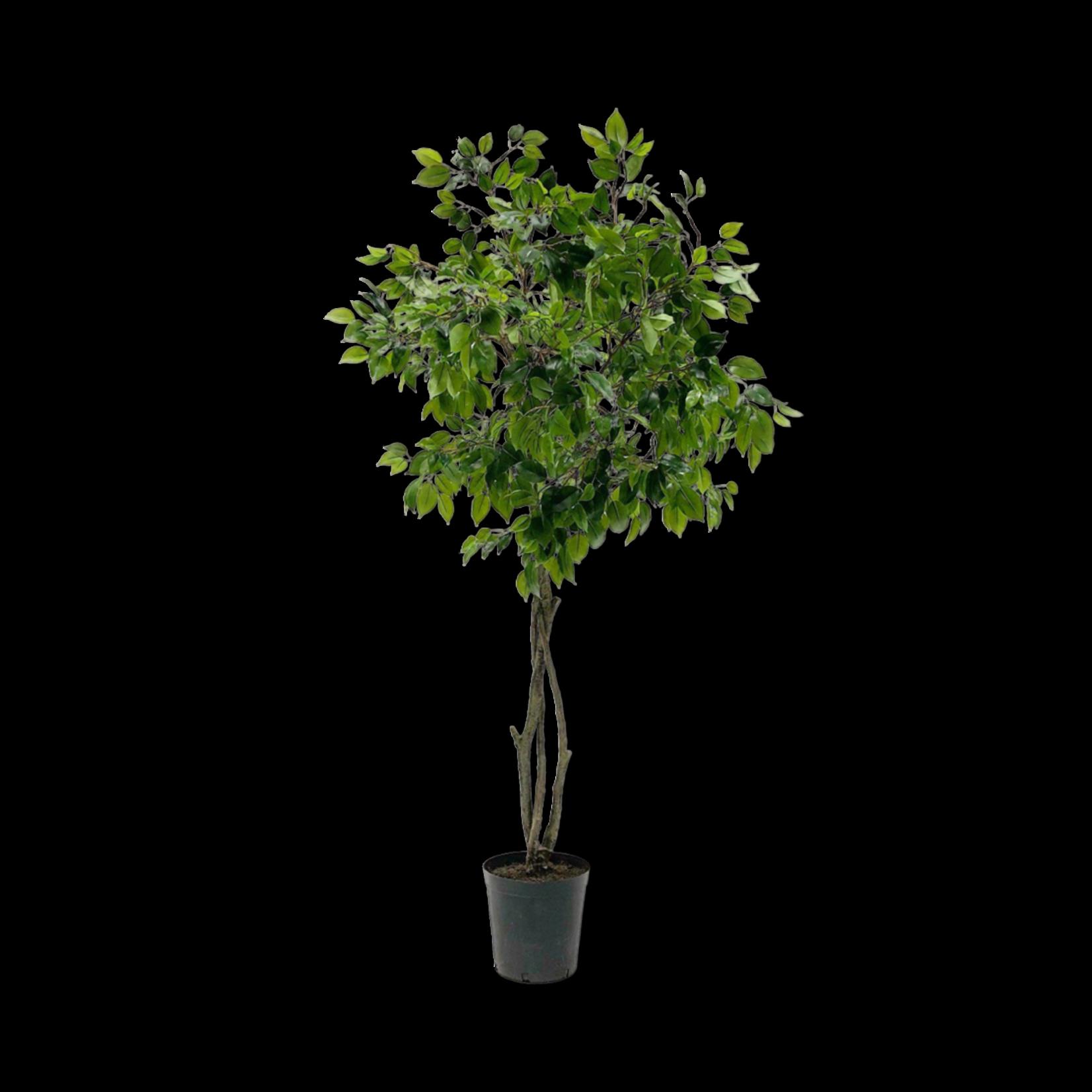 Silk-ka Ficus Green   180 cm