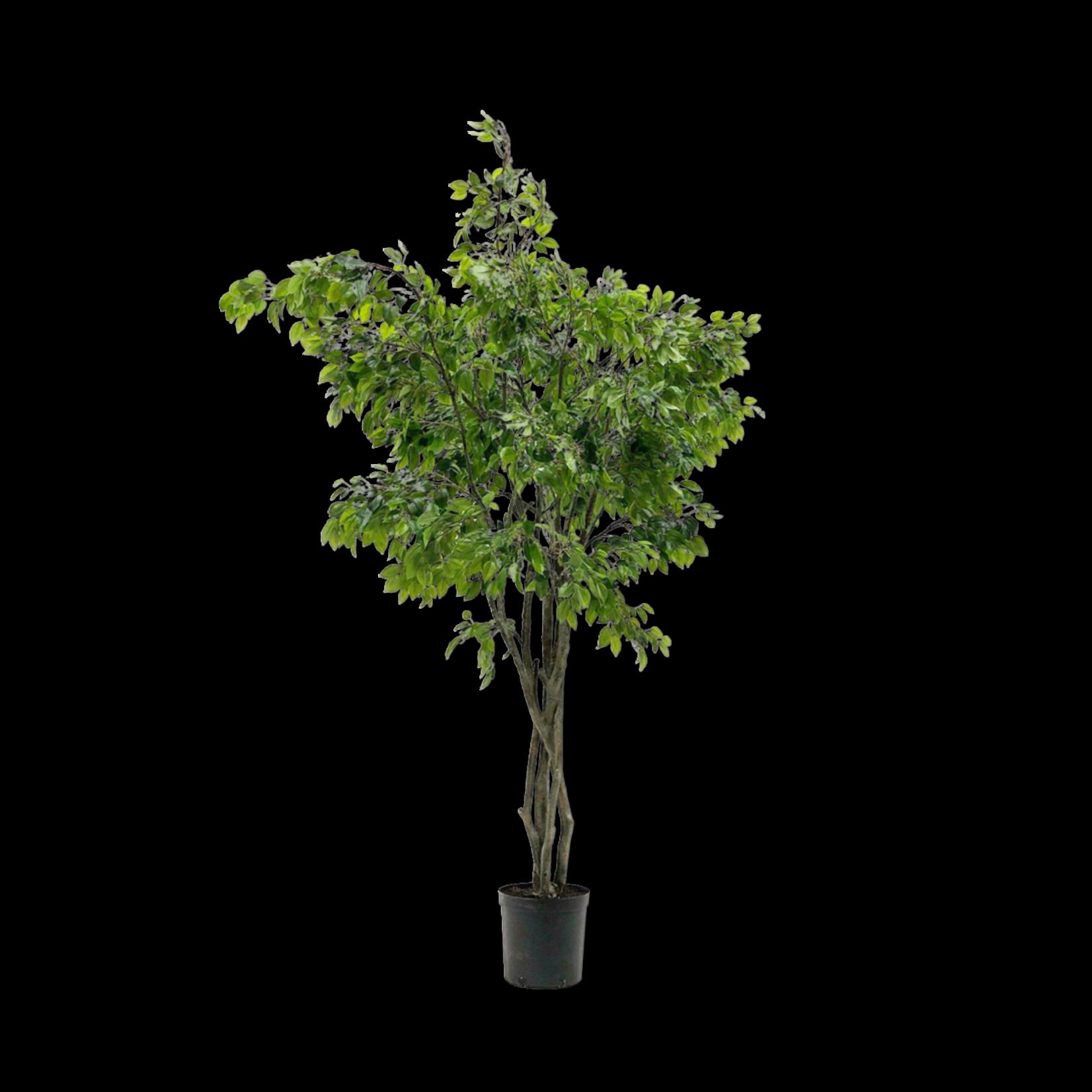 Silk-ka Ficus Groen | 300 cm