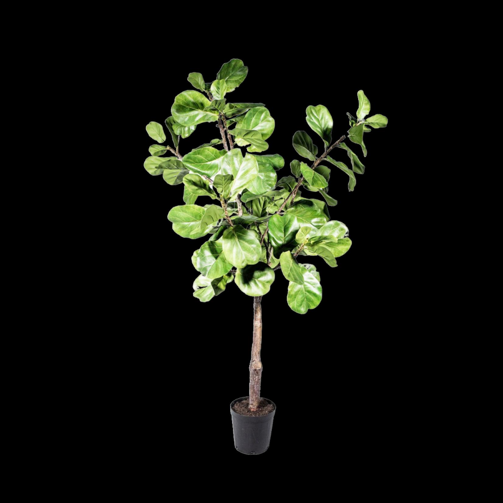 Silk-ka Ficus Groen   198 cm