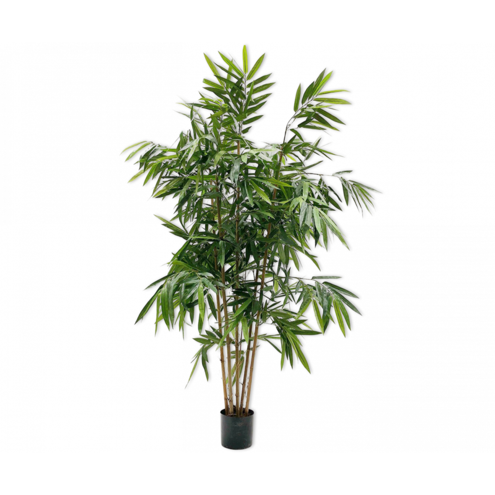 Silk-ka Bamboo Green | 183 cm