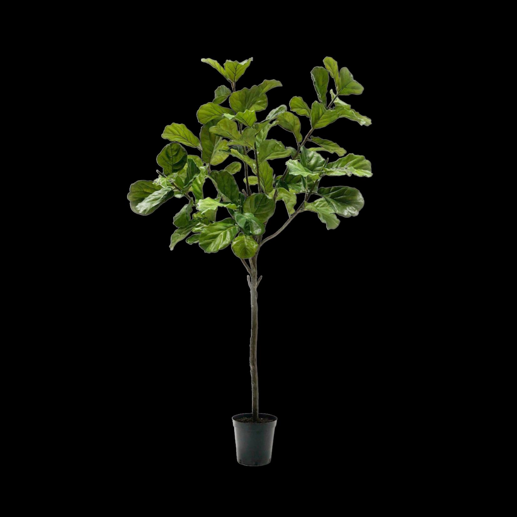Silk-ka Ficus Green | 254 cm