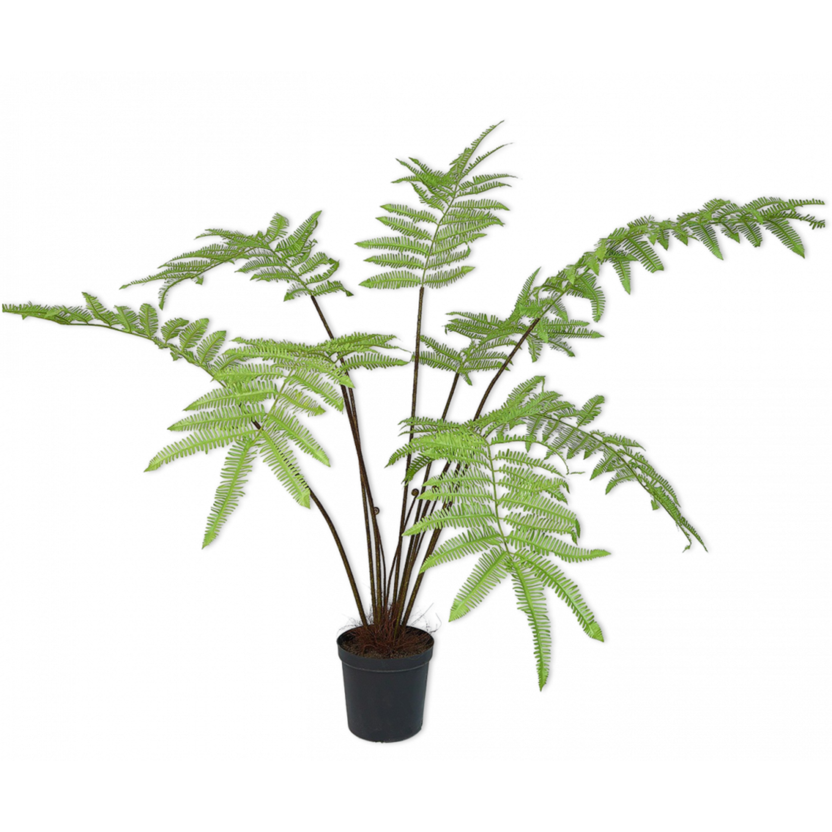 Silk-ka Fern Green | 156 cm