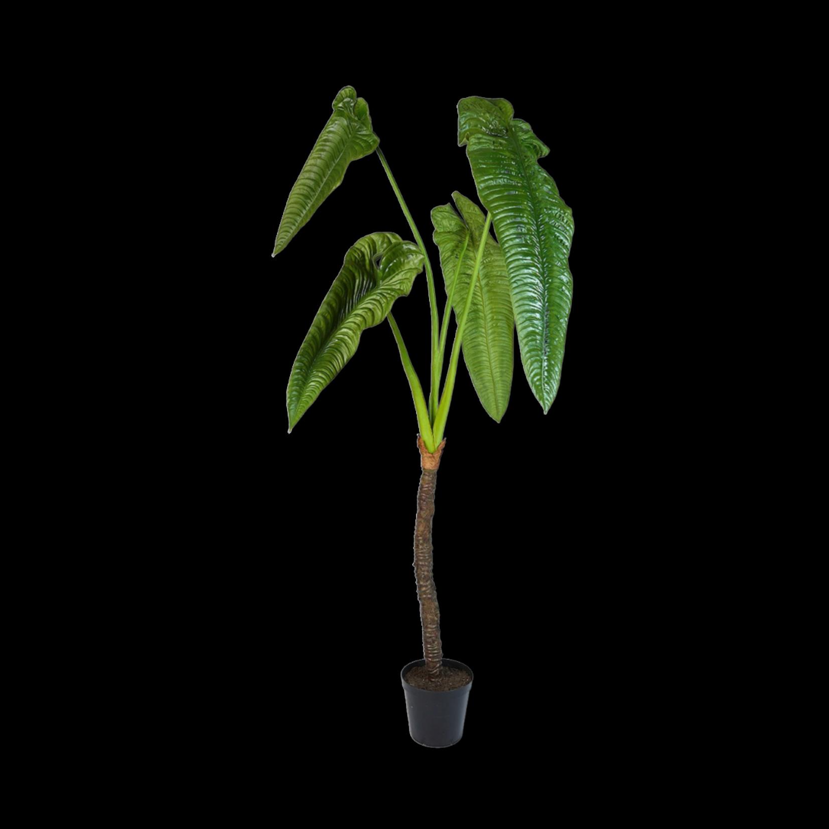 Silk-ka Alocasia Green | 224 cm