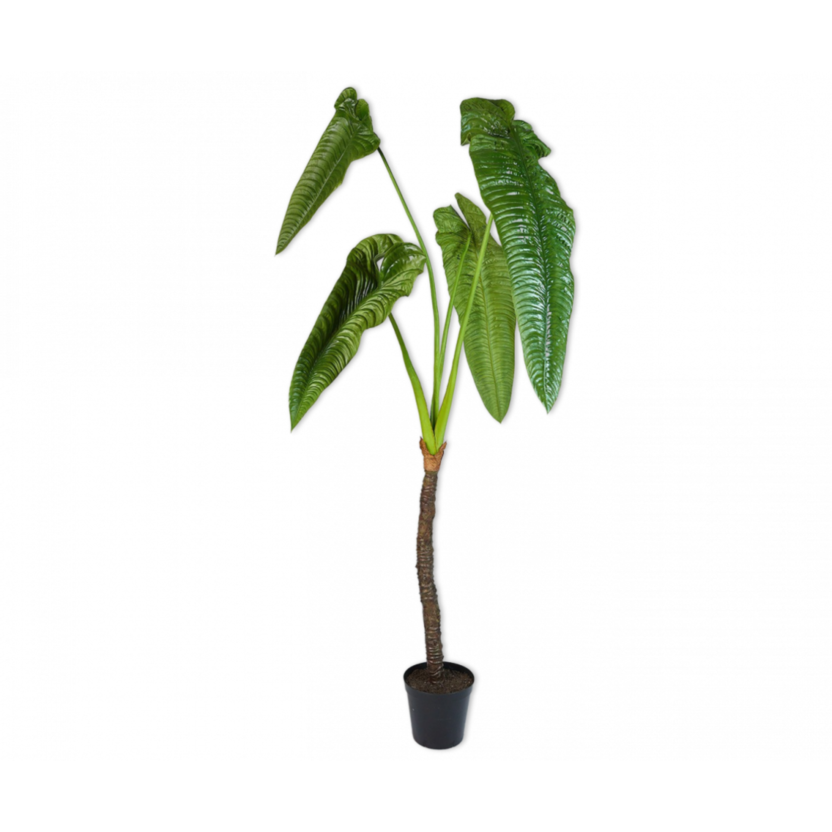 Silk-ka Alocasia Groen | 224 cm