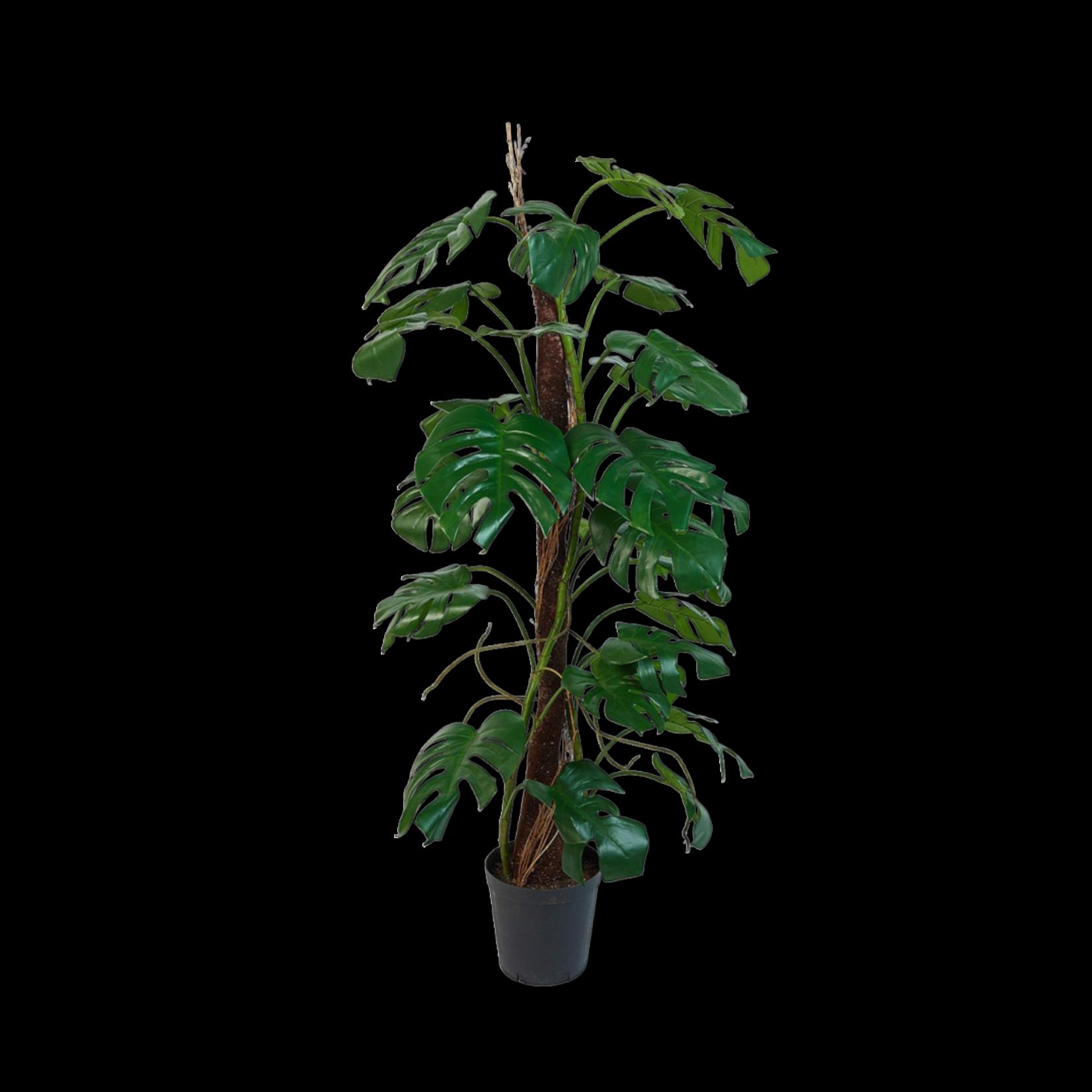 Silk-ka Monstera Green   165 cm