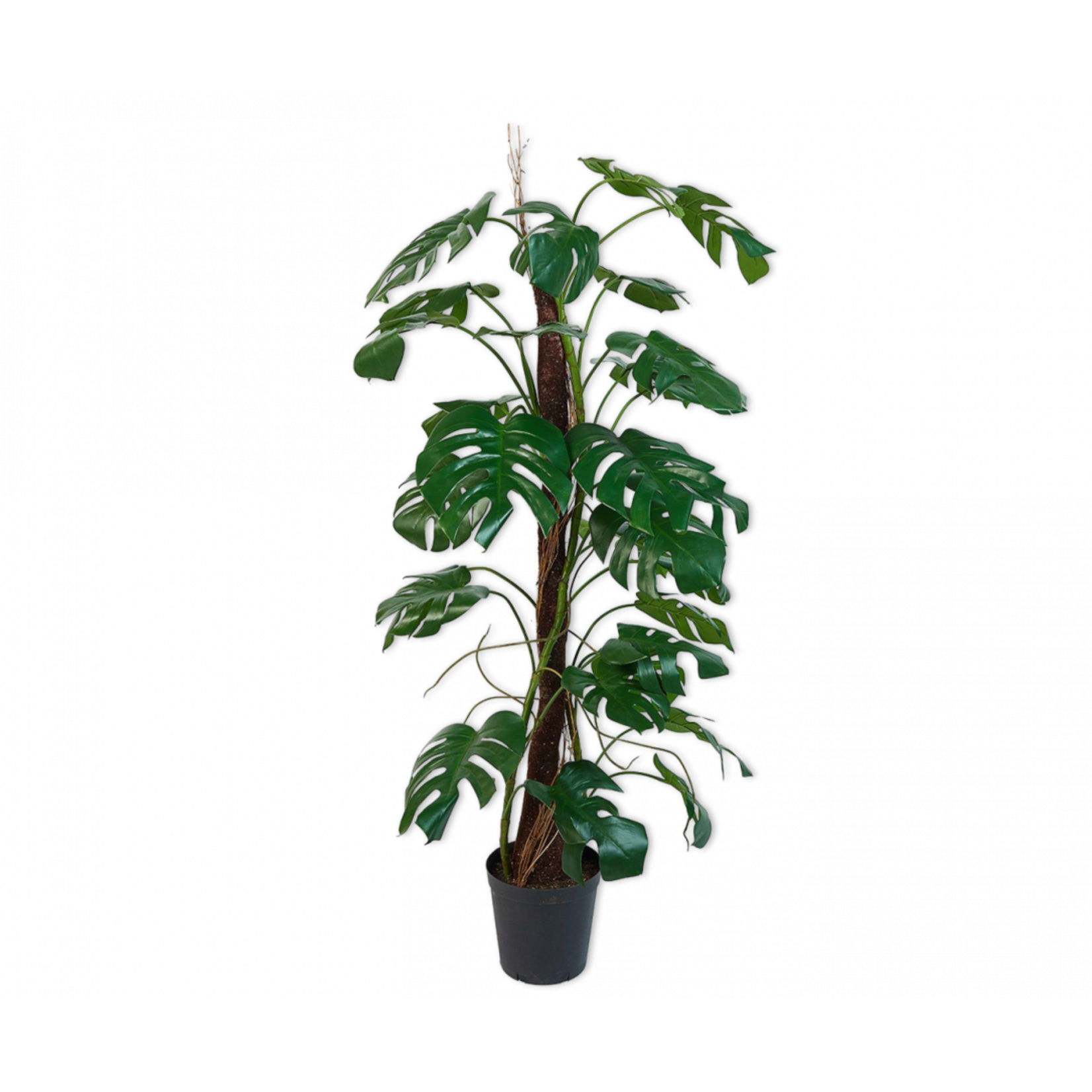 Silk-ka Monstera Groen | 165 cm