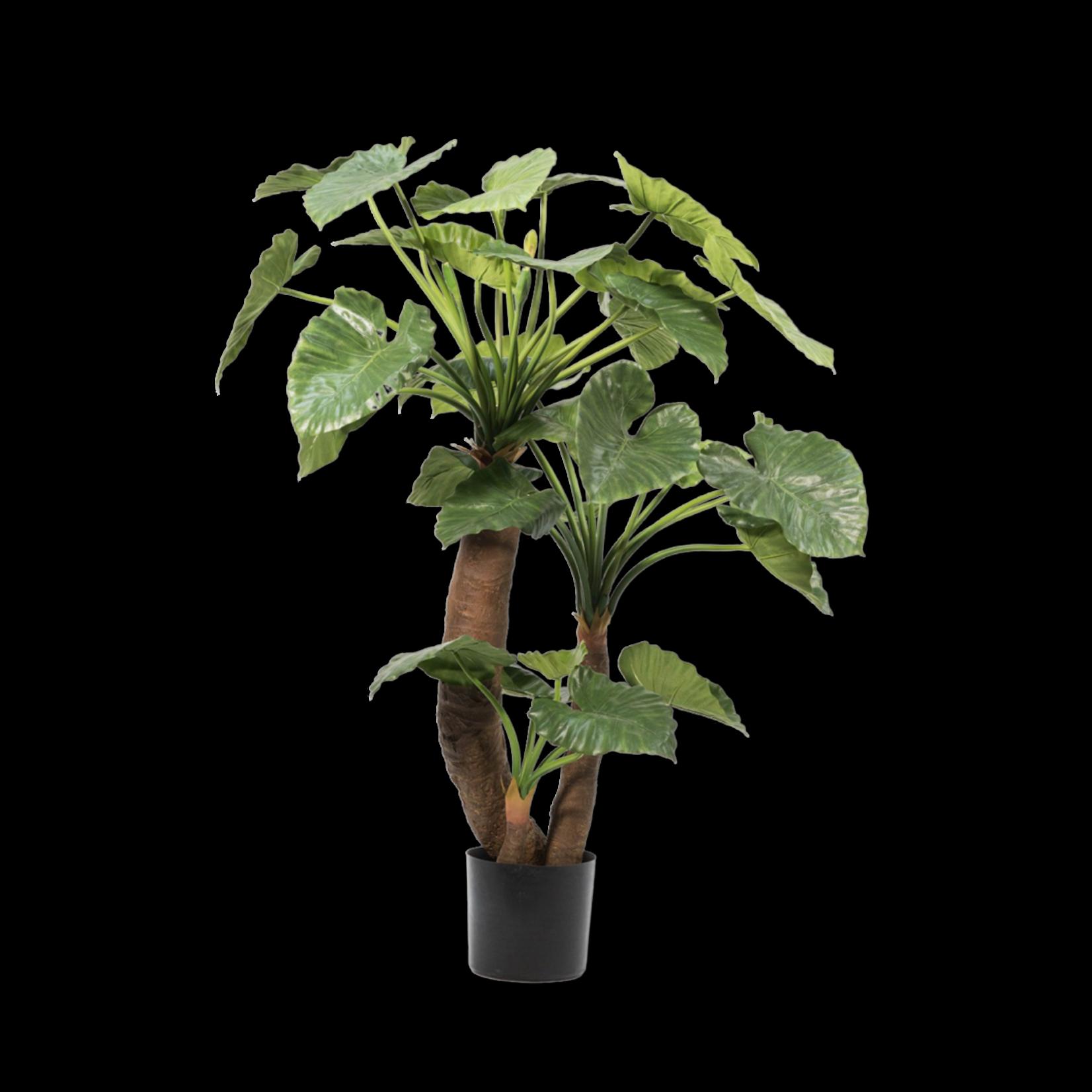 Silk-ka Alocasia Green | 170 cm